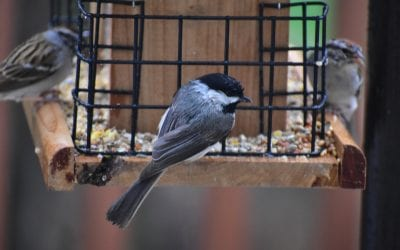 Birds of Winter: Feeding Tips to Keep Your Backyard Flock Happy
